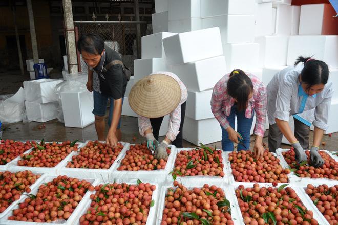 Traffic Jam due to lychee season-3