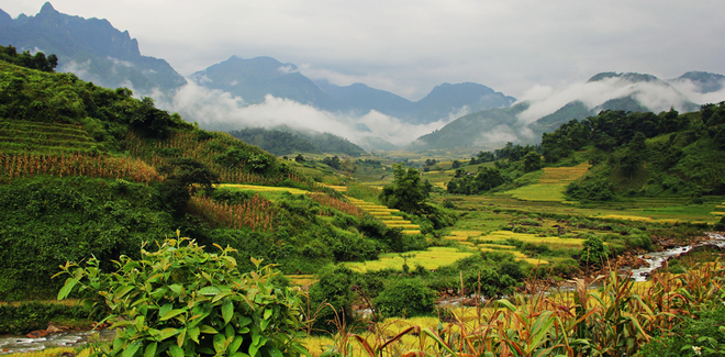 Rice crops in Lao Cai-5