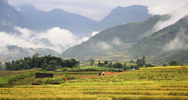Rice crops in Lao Cai-6