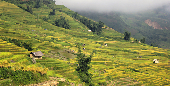 Rice crops in Lao Cai-9