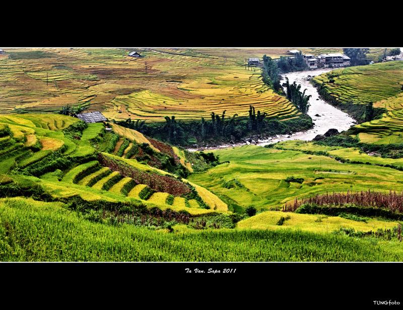 Sapa Rice Terrance (Lao Cai province)