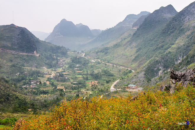 Blumen in Ha Giang-2