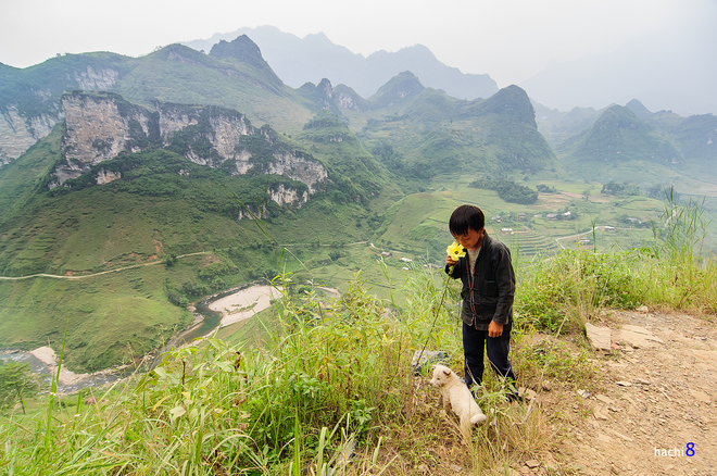 Blumen in Ha Giang-4