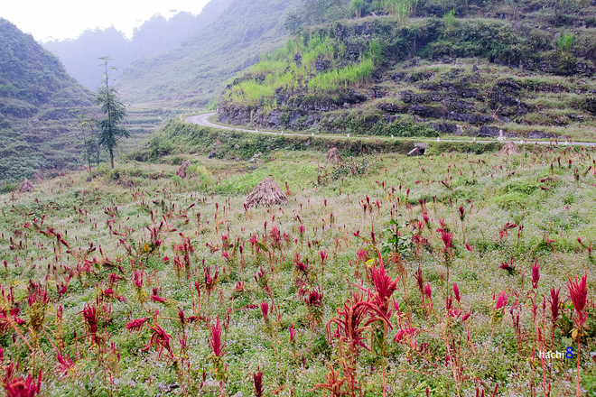 Blumen in Ha Giang-5