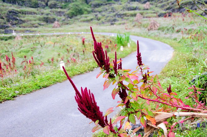 Blumen in Ha Giang-6