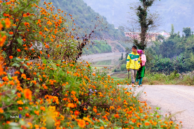 Blumen in Ha Giang-8