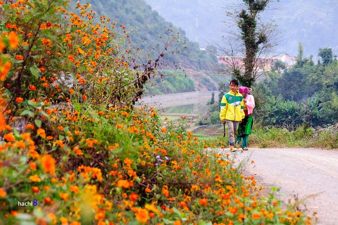 Flowers in Ha Giang-8