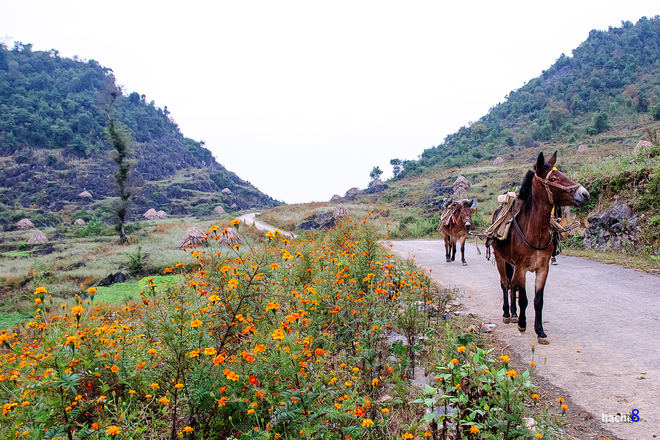 Flowers in Ha Giang-9