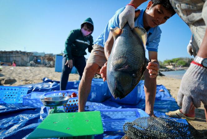 Kommen zu Phu Quy, Besucher sollten nicht eine Chance zu schmecken frische Fischgerichte vermissen.