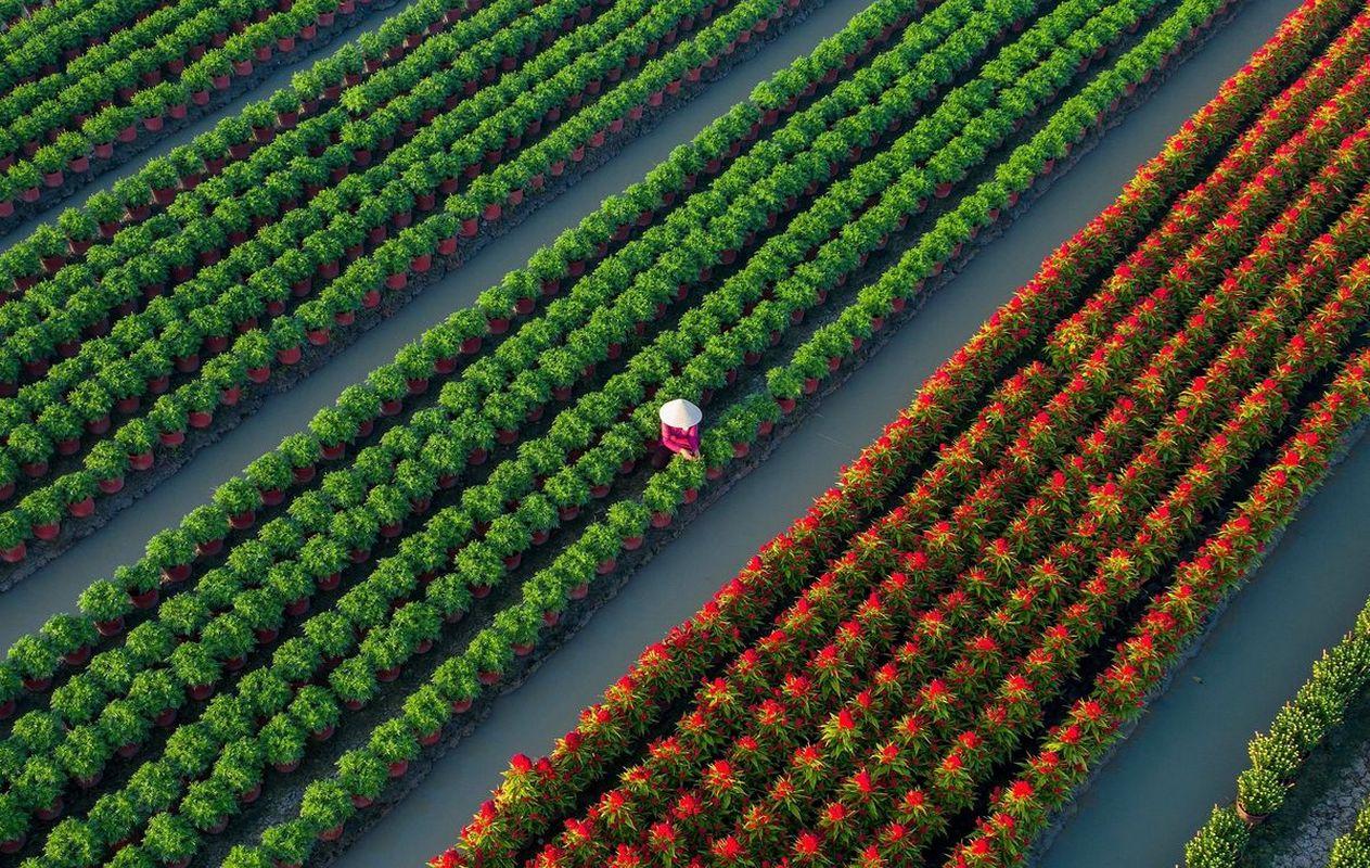 Primavera in Vietnam