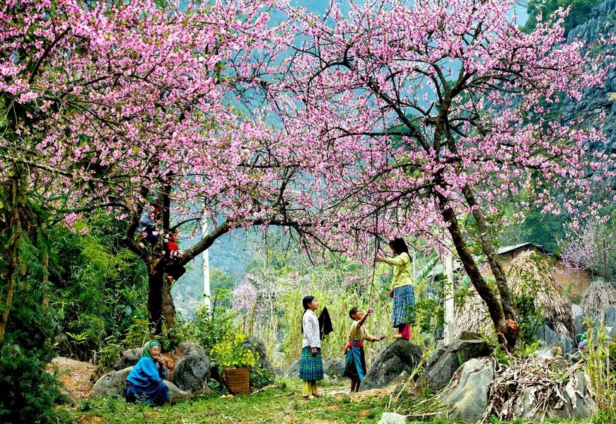 Spring in the Sapa Town