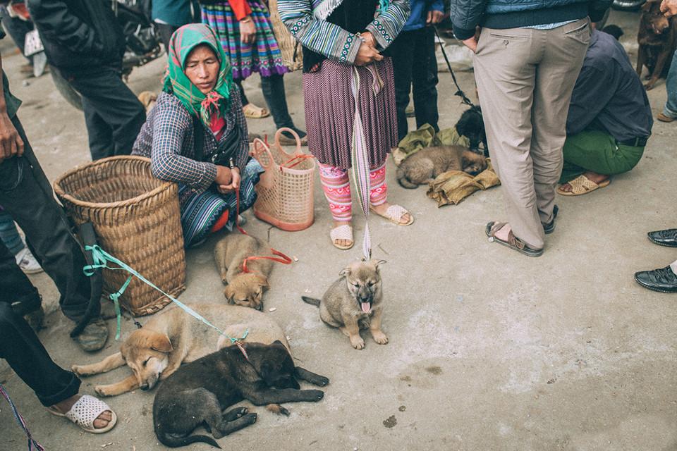 собачий рынок - одно из самых оживленных мест на ярмарке Бакха.
